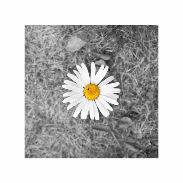 DEORRO - Rise And Shine (B1/Sony)